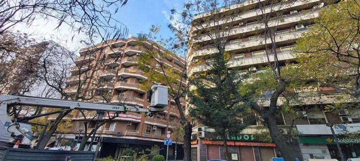 El Ayuntamiento de Puertollano acomete un plan de riesgos para prevenir daños por caída de árboles en el Paseo